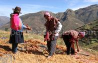 Paysans, Pisac, Cusco