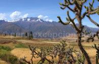 Cactus, flore Pérou