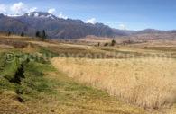 Agriculture, région de Cuzco