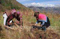 Agriculture à Huayllafara