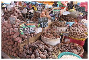 Pommes de terre péruviennes
