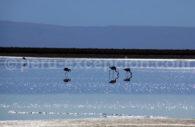 Faune aviaire, Altiplano