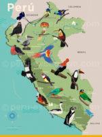 Carte des oiseaux du Pérou
