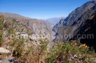 Colca, Pérou