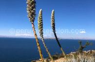 Cordillère Royale, depuis l'île du Soleil, Bolivie