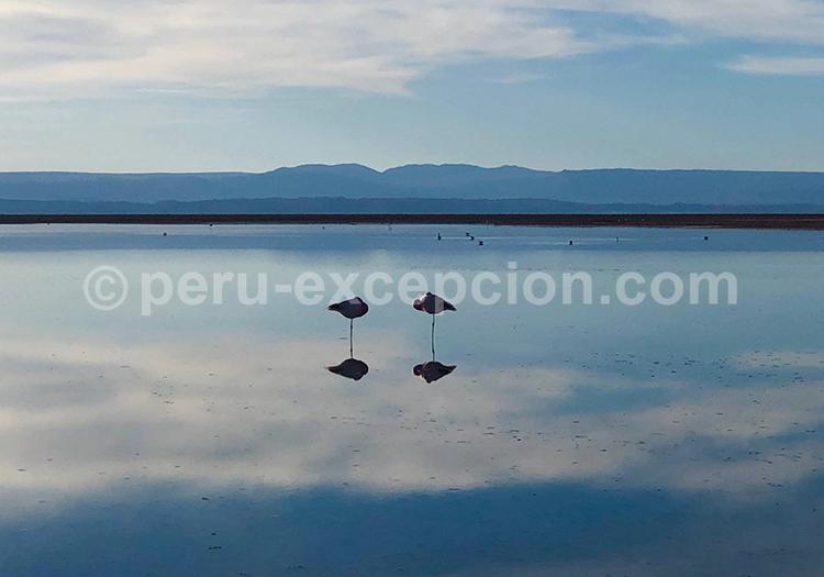 Salar de Chalviri, Bolivie avec Perú Excepción